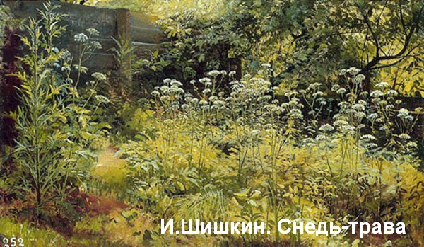 Шишкин. Снедь-трава