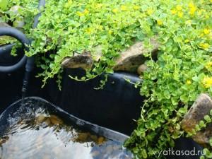 садовый пластиковый пруд