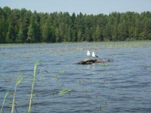 Белохолуницкий пруд