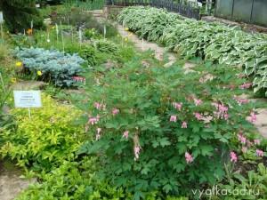 ботанический сад Киров