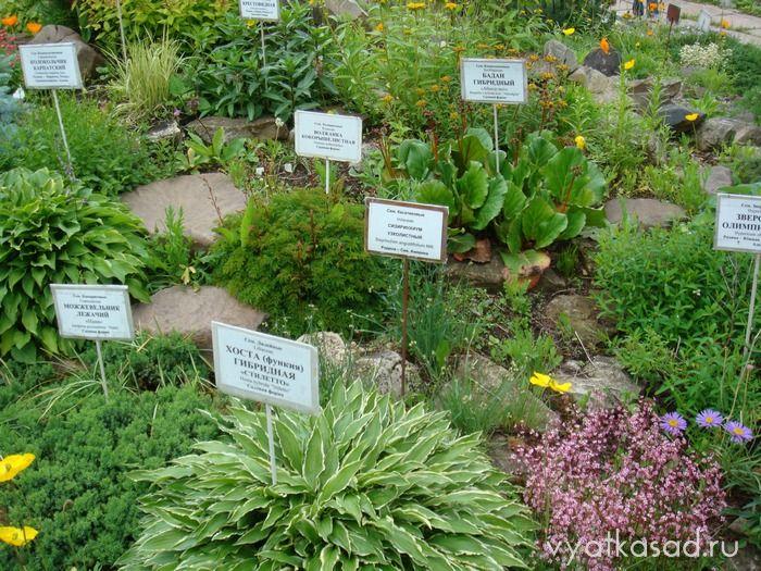 рокарий Кировского ботанического сада