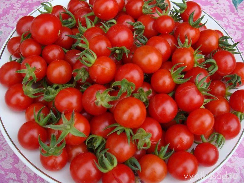 томат F1 Свит-черри