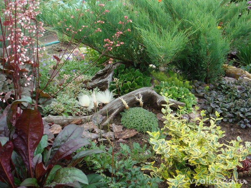 коряга в саду