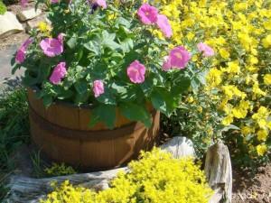 контейнер для цветов