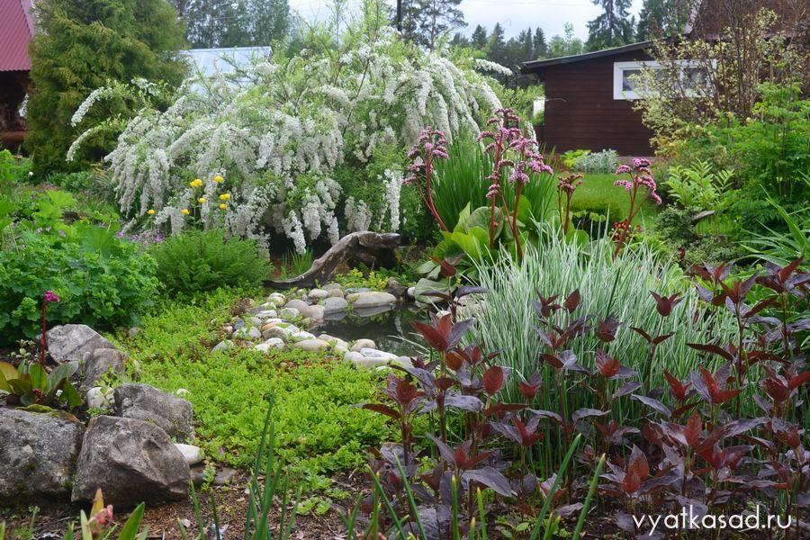 Июньский сад